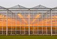 les horticulteurs utilisent l'éclairage pour mener à maturité leurs productions